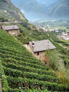 valtellina-wine-terraces-1