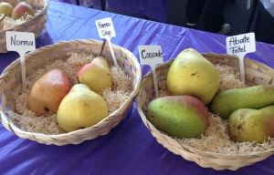 In the Pear tasting tent