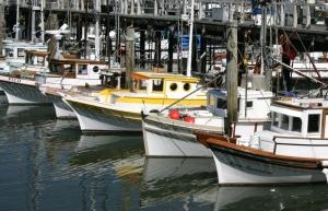 Fishman's Wharf fleet